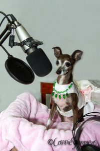 On Air with The Doggy Diva