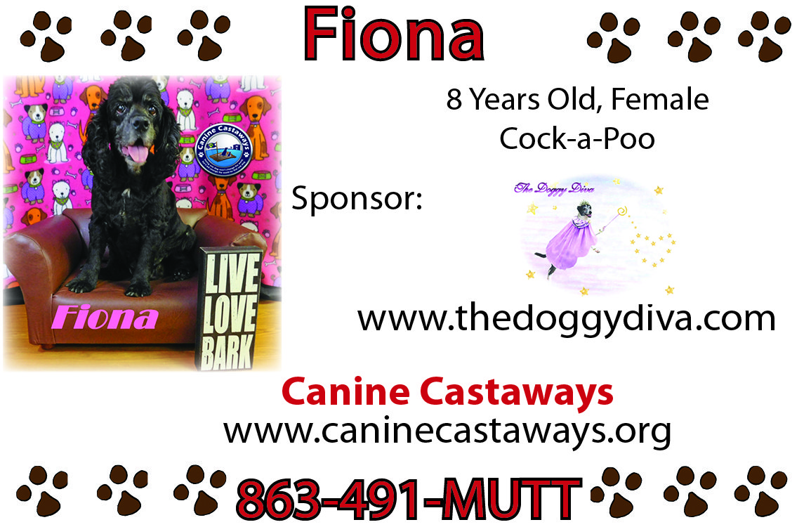 Doggy Diva Rescue Me Ad - Canine Castaways