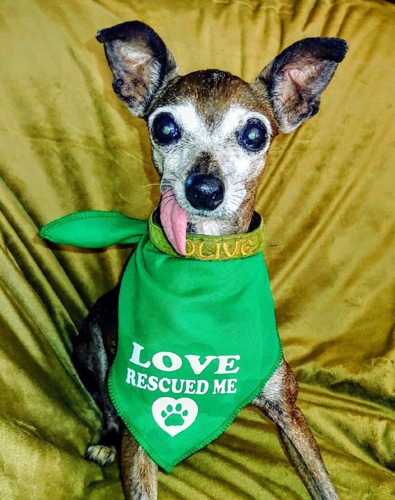 Love Rescued Me green bandana around Olive