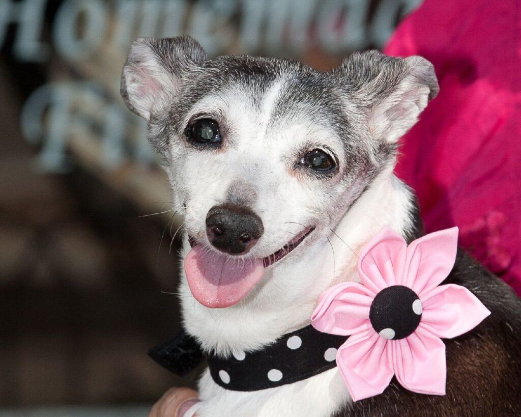 Sophia the original doggy diva